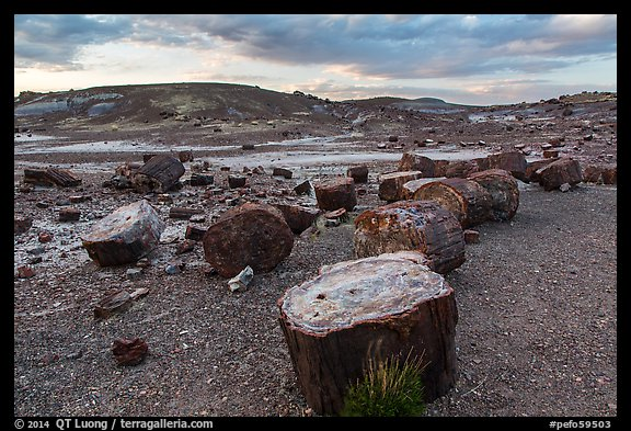 Dense concentration of petrified wood at sunset, Crystal Forest. Petrified Forest National Park (color)