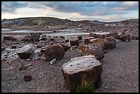 Dense concentration of petrified wood at sunset, Crystal Forest. Petrified Forest National Park ( color)