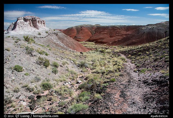 Trail, Painted Desert. Petrified Forest National Park (color)