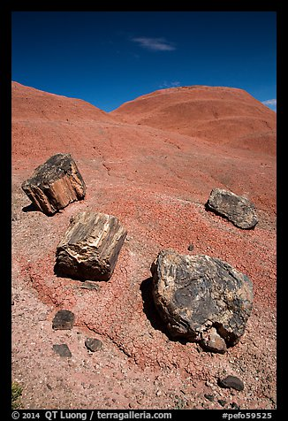 Petrified wood on red badlands,. Petrified Forest National Park (color)