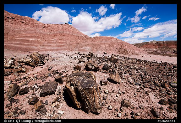 Black Forest, Black Forest Wilderness. Petrified Forest National Park (color)