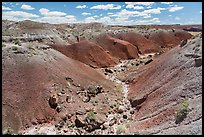 Gully in red badlands filled with petrified wood. Petrified Forest National Park ( color)