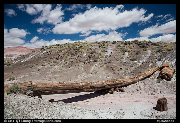 Onyx Bridge. Petrified Forest National Park (color)