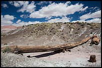 Onyx Bridge. Petrified Forest National Park ( color)