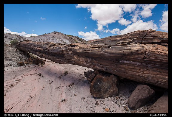 Ancient petrified log laying across arroyo, forming natural bridge called Onyx Bridge. Petrified Forest National Park (color)