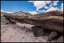 Ancient petrified log laying across arroyo, forming natural bridge called Onyx Bridge. Petrified Forest National Park ( color)