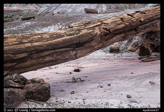Natural bridge formed by petrified log. Petrified Forest National Park (color)