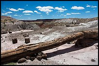 Onyx Bridge, petrified log spanning arroyo. Petrified Forest National Park ( color)