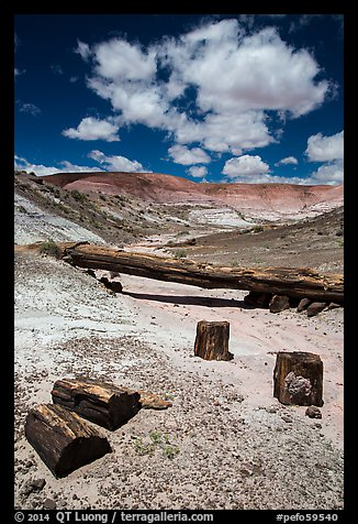 Black petrified wood and Onyx Bridge. Petrified Forest National Park (color)