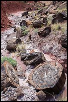 Logs of black petrified wood in Painted Desert. Petrified Forest National Park ( color)