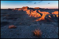Last light on shrubs, Puerco Ridge. Petrified Forest National Park ( color)