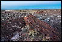 Long petrified longs and badlands at dawn. Petrified Forest National Park ( color)