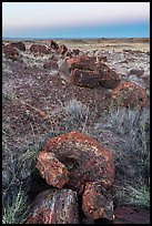 Petrified logs sections at dawn, Longs Logs. Petrified Forest National Park ( color)