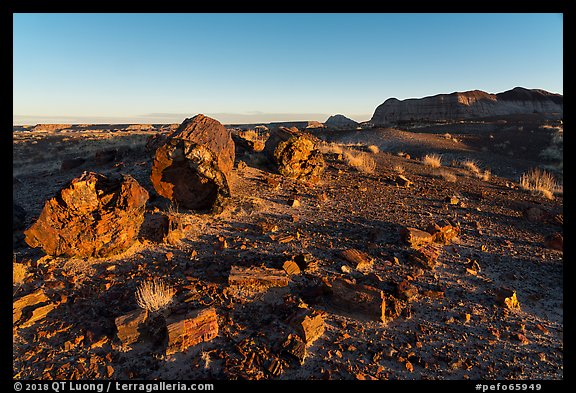 Petrified wood and badlands at sunrise, Longs Logs. Petrified Forest National Park (color)