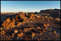 Petrified wood and badlands at sunrise, Longs Logs. Petrified Forest National Park ( color)