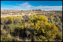 Rabbitbrush and wash. Petrified Forest National Park ( color)