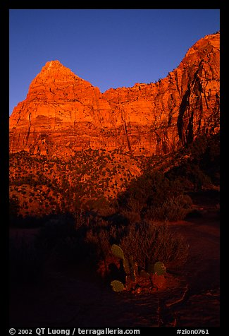 Cactus and Watchman at sunset. Zion National Park (color)