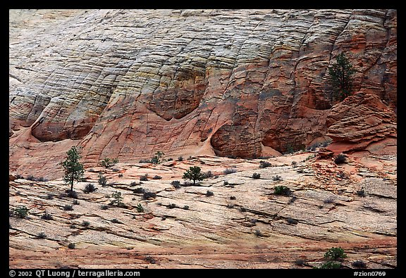 Sandstone checkboard patterns, Zion Plateau. Zion National Park (color)