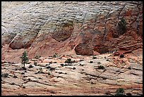 Sandstone checkboard patterns, Zion Plateau. Zion National Park ( color)