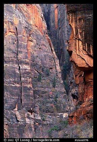 Canyon walls near Angel's landing. Zion National Park (color)