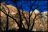 Canyon walls seen through bare trees, Zion Canyon. Zion National Park, Utah, USA.