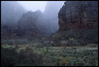 Rainy afternoon, Zion Canyon. Zion National Park, Utah, USA. (color)