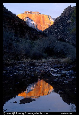 West temple reflected in Pine Creek, sunrise. Zion National Park (color)