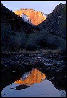 West temple reflected in Pine Creek, sunrise. Zion National Park, Utah, USA.