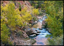 Virgin river, trees in fall foliage, and boulders. Zion National Park, Utah, USA.