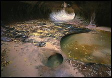Pools and fallen leaves, the Subway. Zion National Park ( color)