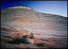 Checkerboard Mesa and moon. Zion National Park ( color)
