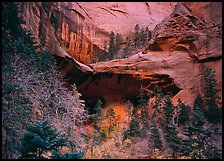 Double Arch Alcove, Middle Fork of Taylor Creek. Zion National Park ( color)