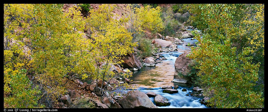 Trees in fall colors on the banks of the Virgin River. Zion National Park (color)