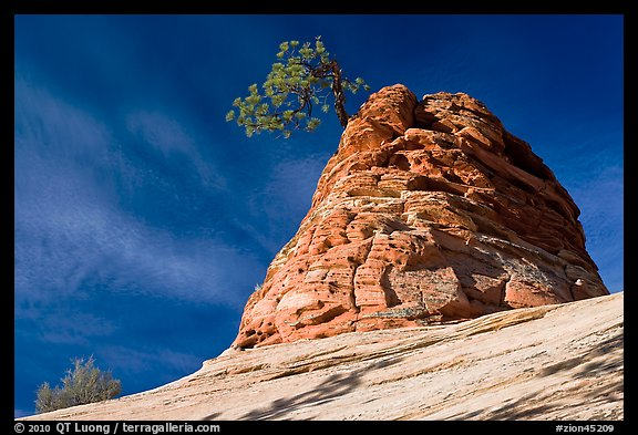 Twisted sandstone formation topped by tree. Zion National Park (color)