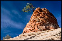 Twisted sandstone formation topped by tree. Zion National Park, Utah, USA. (color)