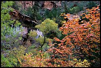 Cliff, waterfall, and trees in fall colors, near the first Emerald Pool. Zion National Park, Utah, USA.