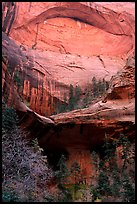 Double Arch Alcove, Middle Fork of Taylor Creek. Zion National Park, Utah, USA. (color)