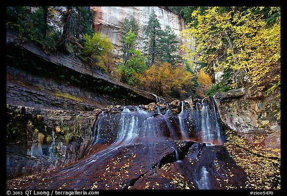 Cascade and tree in autumn foliage, Left Fork of the North Creek. Zion National Park (color)