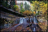 Cascade and tree in autumn foliage, Left Fork of the North Creek. Zion National Park, Utah, USA.
