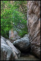 Boulders, trees, and cliffs, Hidden Canyon. Zion National Park ( color)