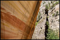 Sheer wall with desert varnish and wall with trees, Mystery Canyon. Zion National Park ( color)
