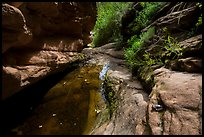 Frog and stream, Mystery Canyon. Zion National Park ( color)