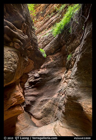 Slot canyon and vegetation, Mystery Canyon. Zion National Park (color)