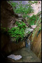 Stream, ferns, and canyon walls, Mystery Canyon. Zion National Park ( color)