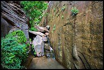 Canyon walls and stream, Mystery Canyon. Zion National Park ( color)