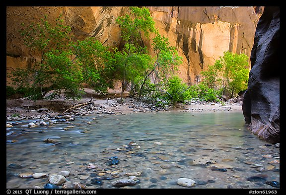 Virgin River and trees in early summer. Zion National Park (color)