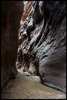 Dark passage in Orderville Narrows. Zion National Park ( color)