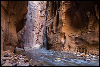 Visitor looking, the Narrows. Zion National Park ( color)