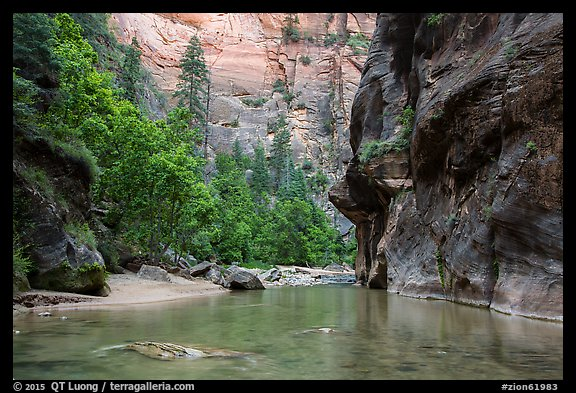 Wide portion of the Narrows with pocket of forest. Zion National Park (color)