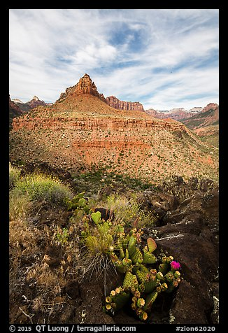 Cactus and North Fork. Zion National Park (color)